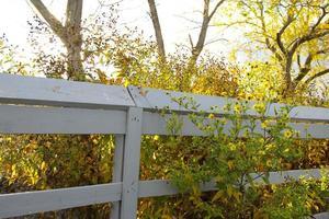 balustrade en bois et fleurs jaunes photo
