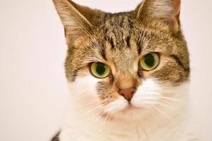 portrait de chat tigré photo