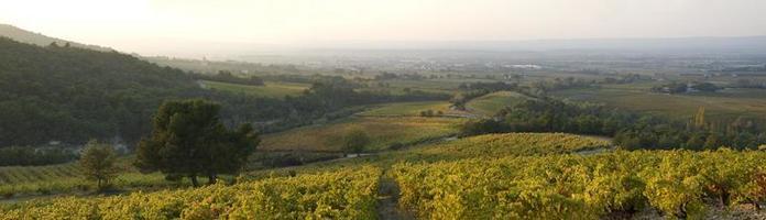 panoramique - paysage de vignes en automne