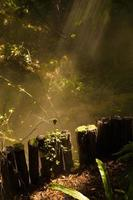 rayons de soleil à travers une forêt brumeuse