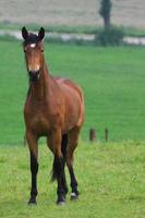 pferd photo