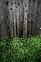 contraste de l'herbe par rapport à la clôture. photo