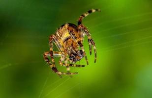 araignée bouchent photo
