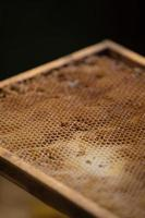 gros plan en nid d'abeille photo