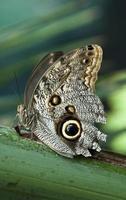 gros plan de papillon photo