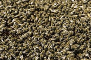 gros plan nids d'abeille