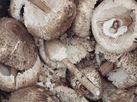 champignons ... gros plan photo