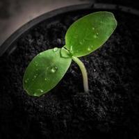 semis, gros plan photo