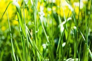 herbe se bouchent