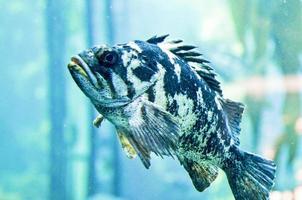 poisson bouchent photo