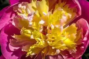 gros plan, fleur photo