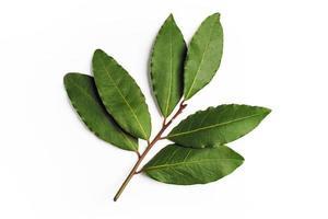 feuilles de laurier vert photo