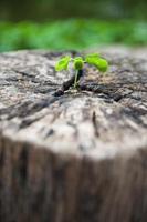 feuilles vertes avec souche de bois photo