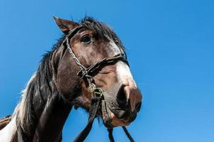 portrait de bride de cheval