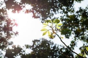 fond d'arbres de la forêt verte. photo