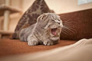 chat mignon appréciant sa vie