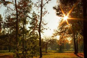 sunflare derrière la cime des arbres dans le parc photo