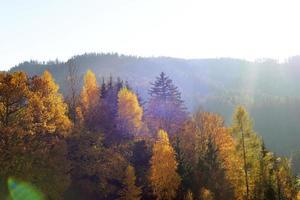 du vert à l'or photo