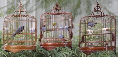 cages à oiseaux chinois photo