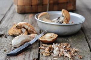 processus de nettoyage des champignons forestiers comestibles photo