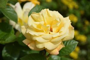 fond de fleur photo