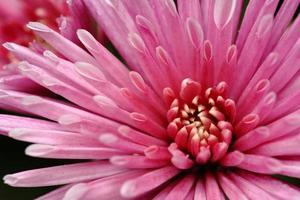 fleur 50 photo