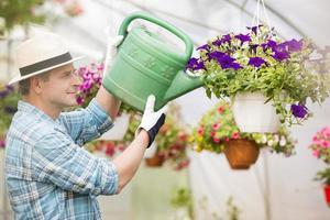 homme d'âge moyen, arroser les plantes à fleurs en serre