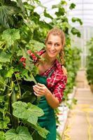 Jardinière en jardin maraîcher ou en pépinière photo