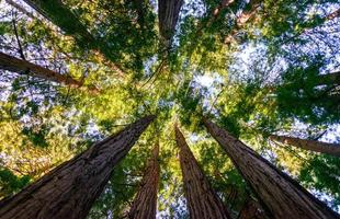 monument national des bois de muir photo