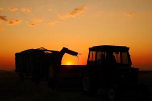 récolte coucher de soleil et les gens à bozcaada photo