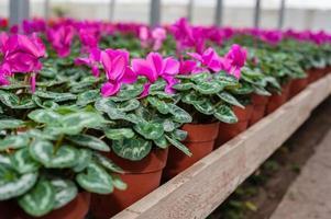 culture de fleurs dans une serre