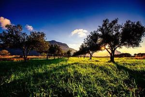 ombre d'arbre avec coucher de soleil photo