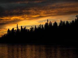 silhouette de forêt au coucher du soleil photo