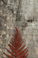 feuille de fougère rouge sur fond de bois photo