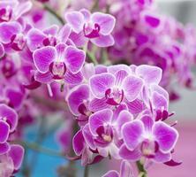 macro d'orchidée rose bouchent dans le spa de santé. photo