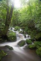 ruisseau et mousse