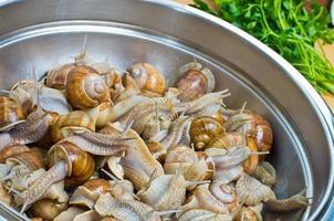escargots dans le bol pendant la préparation photo