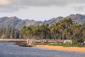 cocotier sur la plage de sable à kapaa hawaii photo