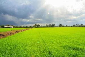 paysage de champ vert avec les rayons du soleil et la lumière parasite