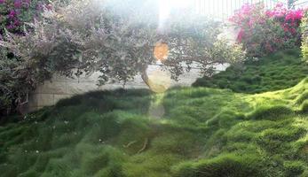 pelouse photo