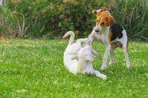 chiens jouant photo