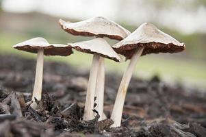 groupe de champignons sauvages photo