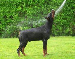 L'heure de la douche