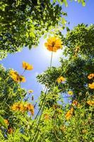 fleurs jaunes contre le ciel photo