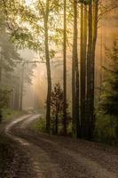 lever du soleil dans la forêt