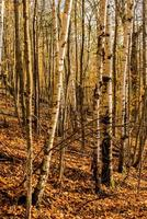 bois d'automne photo