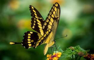 borboleta photo