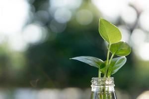 plante en bouteille photo
