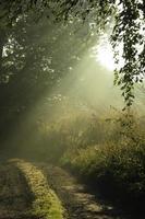 la lumière sur un chemin