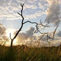 coucher de soleil derrière un arbre photo